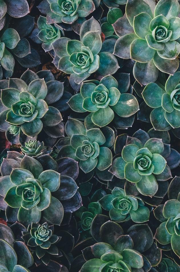 plantevæg i hjemmet